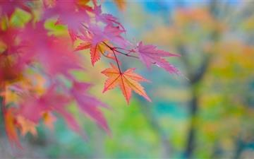 Autumn Colors In Japan All Mac wallpaper