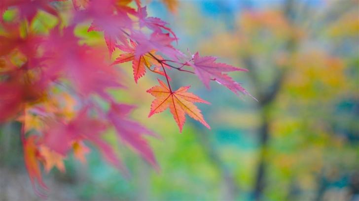 Autumn Colors In Japan Mac Wallpaper