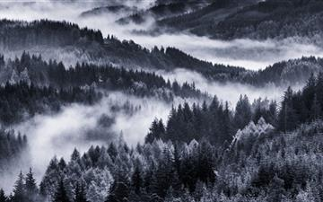 Early Morning Mist Forest All Mac wallpaper