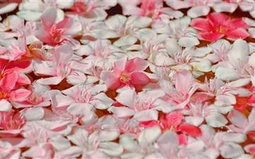 Floating Petals Mac wallpaper