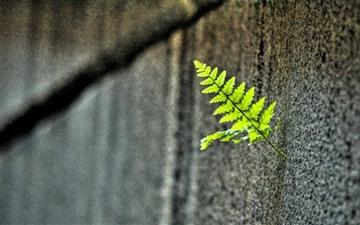 Small Fern All Mac wallpaper