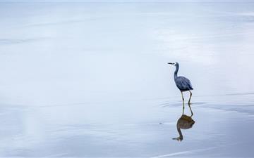 Birds Reflection In Water Mac wallpaper
