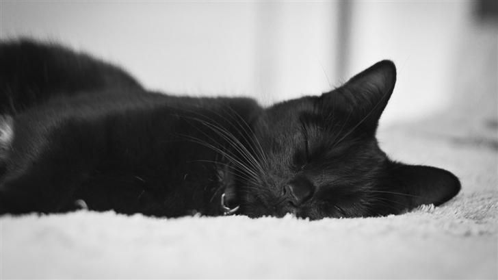 Black Cat Mac Wallpaper