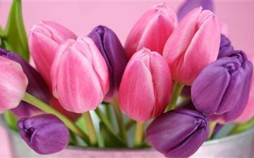 Pink And Purple Tulips Mac wallpaper