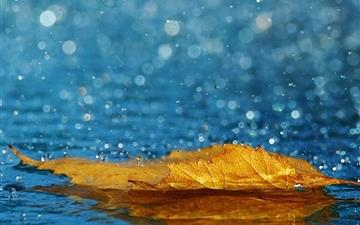 Yellow Leaf In The Rain All Mac wallpaper