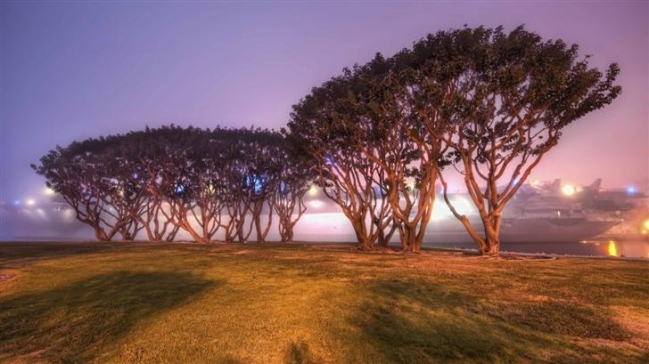 Trees In San Diego Mac Wallpaper Download | Free Mac