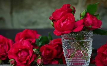 Fresh Red Roses All Mac wallpaper