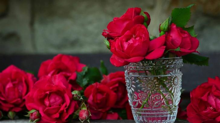 Fresh Red Roses Mac Wallpaper
