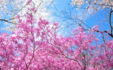Happy Spring Mac wallpaper