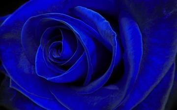Blue Velvet Mac wallpaper