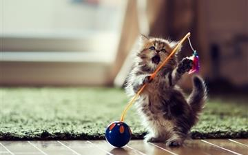 Lovely Playful Kitten All Mac wallpaper