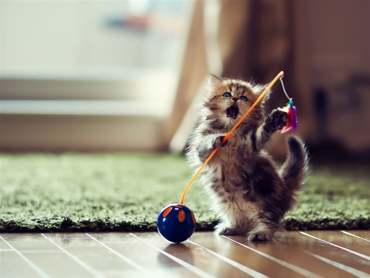 Lovely Playful Kitten Mac Wallpaper