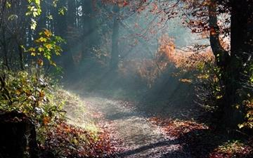Forest Sunny Way All Mac wallpaper