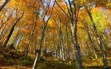 Hill Forest Autumn Mac wallpaper